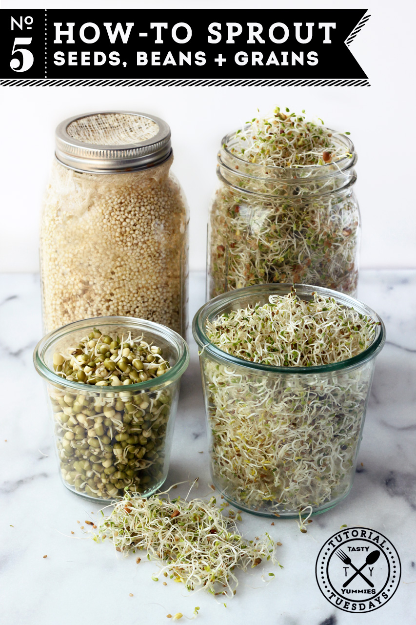 How to Sprout Seeds
