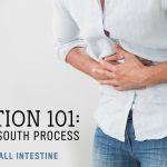 Digestion 101: A North to South Process // Part 4: The Small Intestine