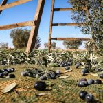 Is Your Olive Oil the Real Thing? Terra Delyssa Is.